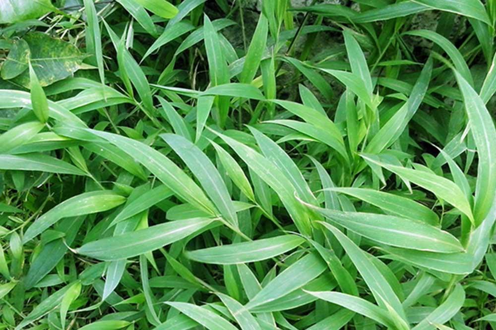 Cebu Palm Grass Hotel Incorporated